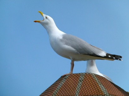bird control pest control services and pest control deterrents